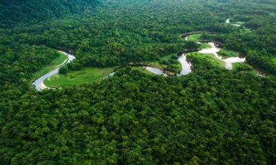 sustentabilidade na Amazônia
