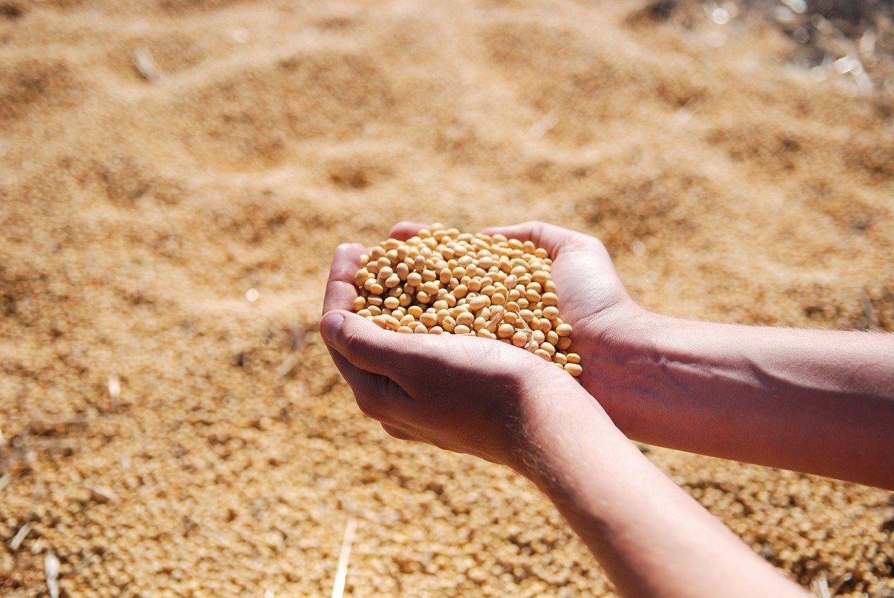 SLC Agrícola e Terra Santa Agro confirmam combinação de negócios