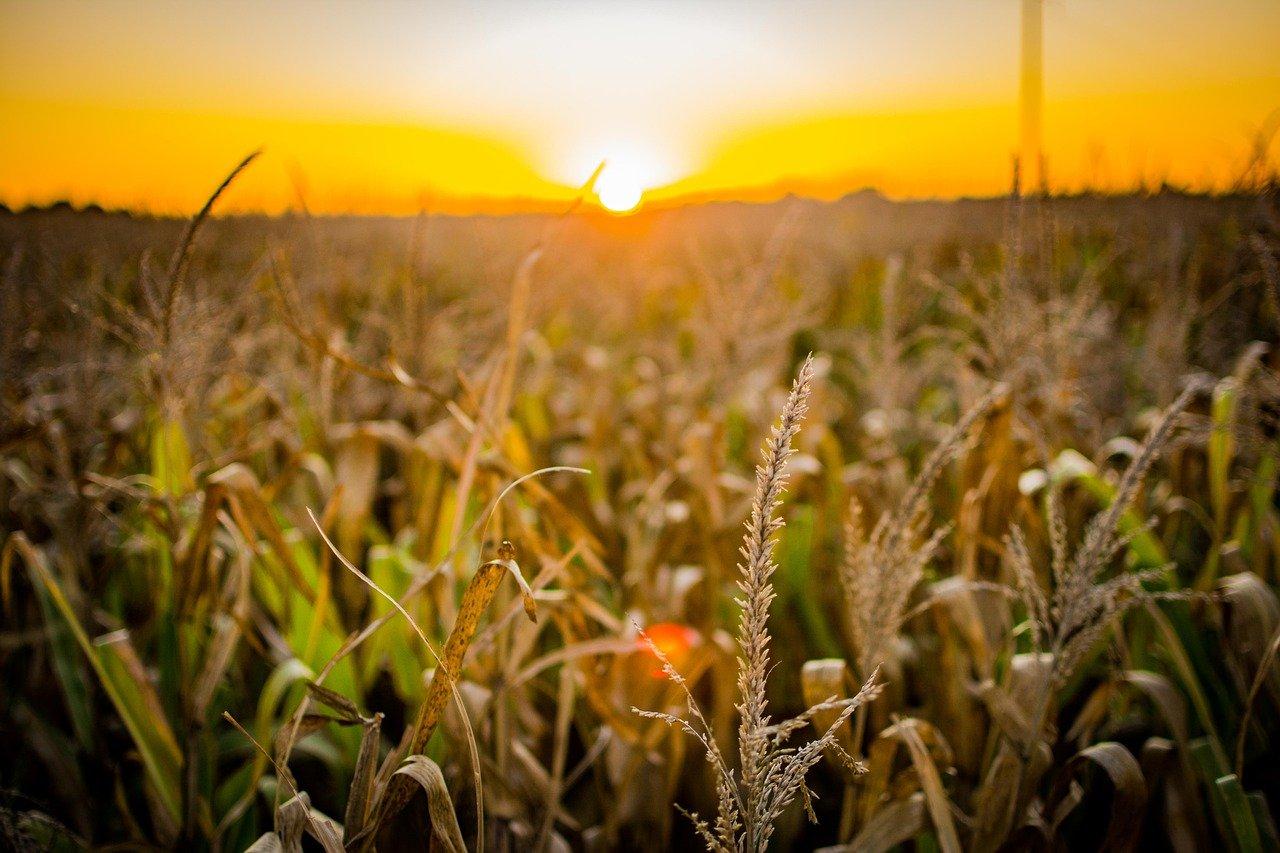 Bolsonaro sanciona Lei que cria fundo de investimento do agronegócio