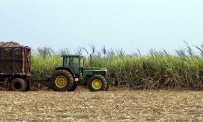 Empresas internacionais pretendem abandonar commodities brasileiros; Entenda